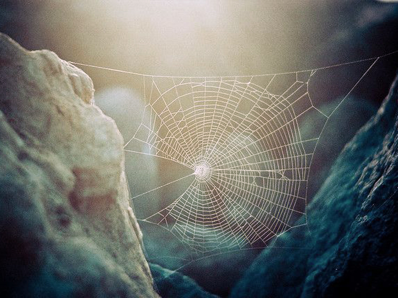 January 17, 2017 – God and the Spider